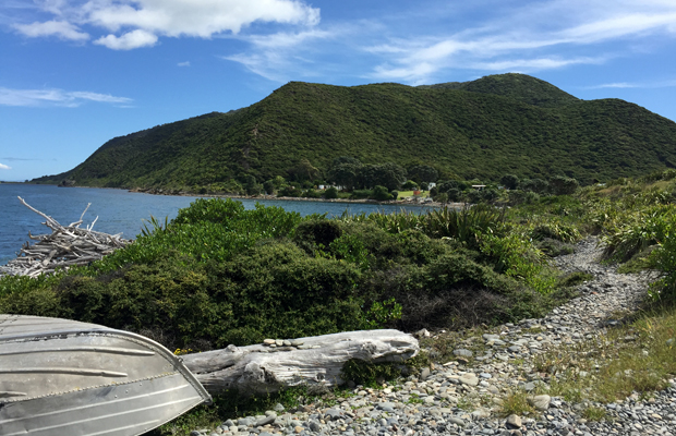 New Zealand's Remote Kapiti Island: What You Need to Know