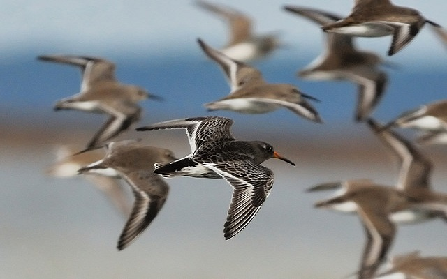 For the Birds: 7 Places to Watch Fowl Take FlightAcross America