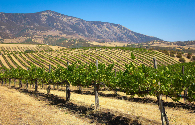 Beyond Napa & Sonoma: 5 Off-the-Beaten-Path Wineries in Northern California