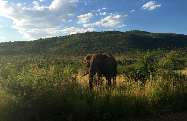 South Africa Safari for Beginners: 3 Ways to Ease In