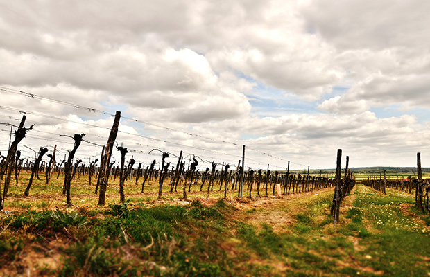 Why You Should Tour Wine Country in the Off Season