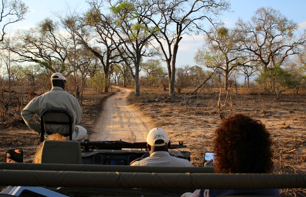6 Things to Consider Before Booking a South Africa Safari