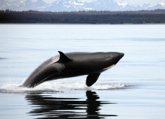 Alaska 7-Nt Cruise w/3rd & 4th Passenger Discount from $499