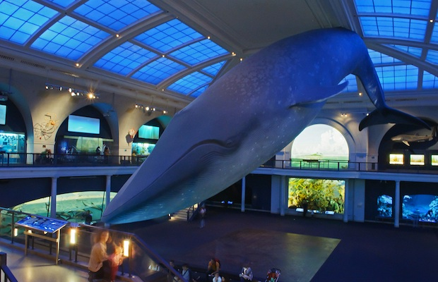 U.S. Museums with Free or Pay-as-You-Wish Entry