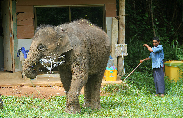 How to Interact with Elephants (Ethically!) in Thailand
