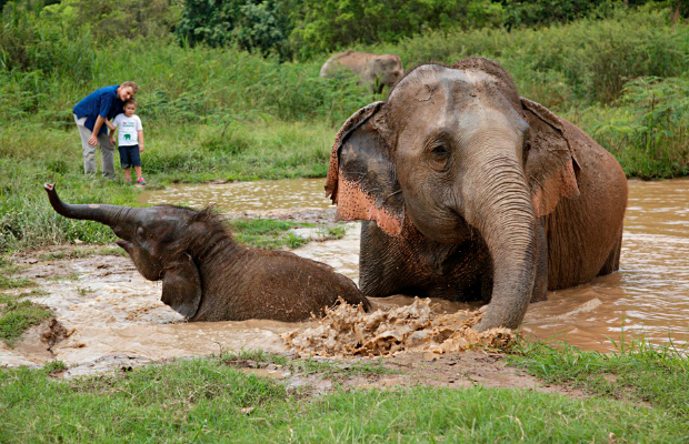 Checking In: Thailand's Anantara Golden Triangle Elephant Camp & Resort