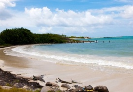 A Jaunt to the Lush Paradise of Antigua