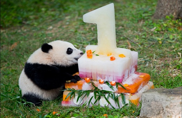 The 7 Best Places in the World to See Pandas
