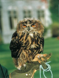 Pop the Question with the Help of Ashford Castle's Owl
