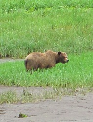 See Grizzly Bears by Boat in British Columbia