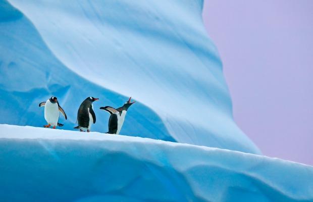 Deal Alert: $1,000 Off a Photography Cruise to Antarctica
