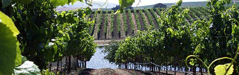 California Wine Country 101