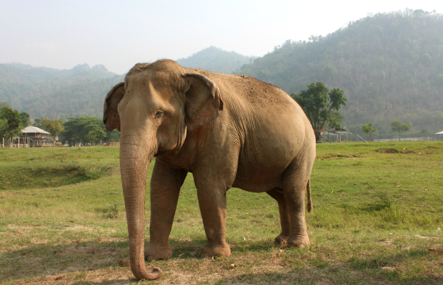 3 (Responsible) Ways to See Animals in Southeast Asia