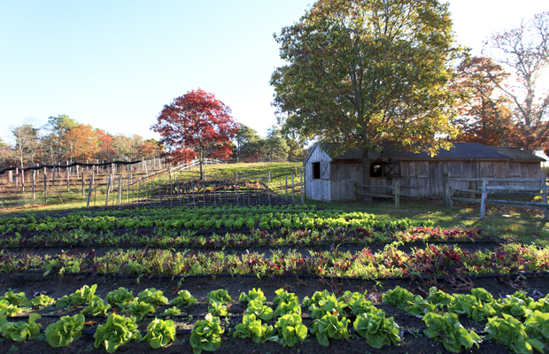4 Hotels With Amazing Farms You Can Visit