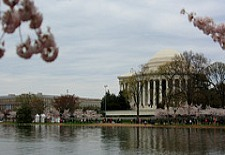 $135+: Washington, D.C. Normandy Hotel Cherry Blossom Special; 20% OFF