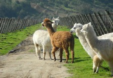 Wine Tasting and Hacienda-Hopping in Chile