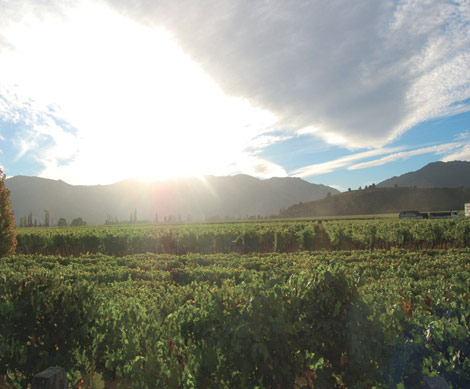 A Country Cloister in Chile's Colchagua Wine Region
