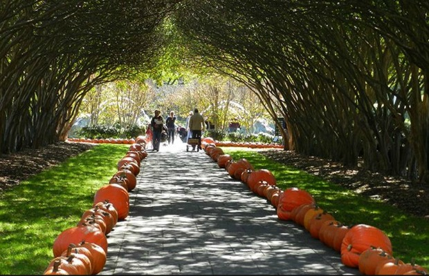 5 Great Pumpkin Festivals for Getting in the Fall Spirit