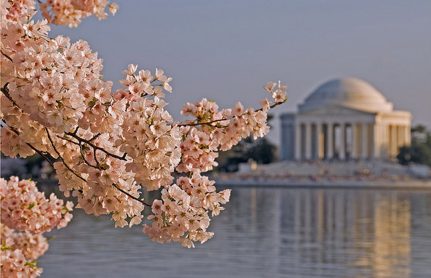A Guide to Washington, D.C.'s Cherry Blossom Festival