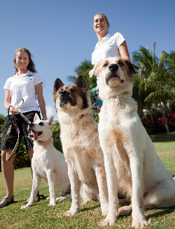 Luxury Walks for Dogs