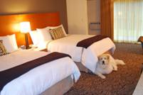 Dogs Rule At Hotels