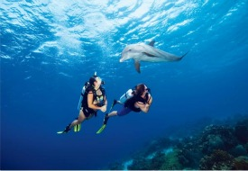 Dive to New Destinations with PADI Certification