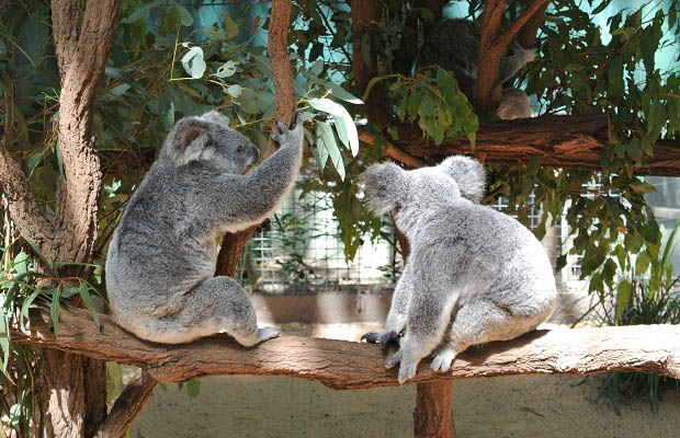 3 Awesome Aussie Animal Encounters
