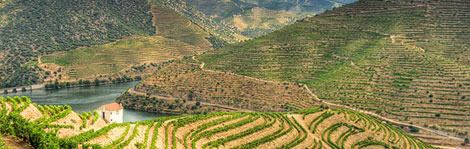 5 Portuguese Wine Regions for Sips and Savings