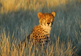 Save Over $1,000 on 7-Night South African Safari from Extraordinary Journeys