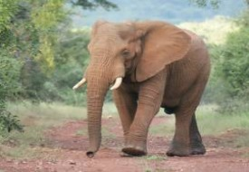 See – and Help – Wildlife in South Africa with New Humane Society International Tours