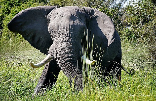 How Travel Can Help Endangered Animals