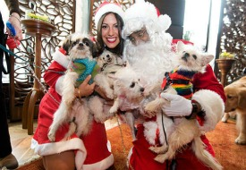 Kimpton Hotels Invite Pets for a Visit with Santa
