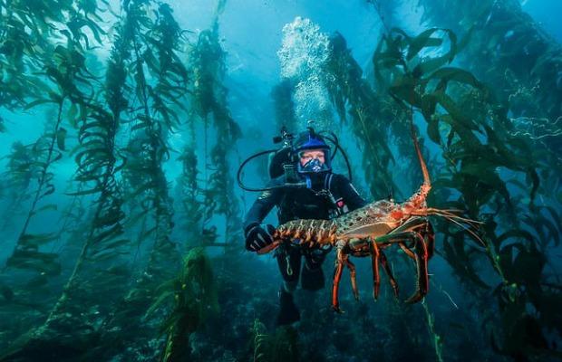 4 Totally Unique Scuba Diving Destinations