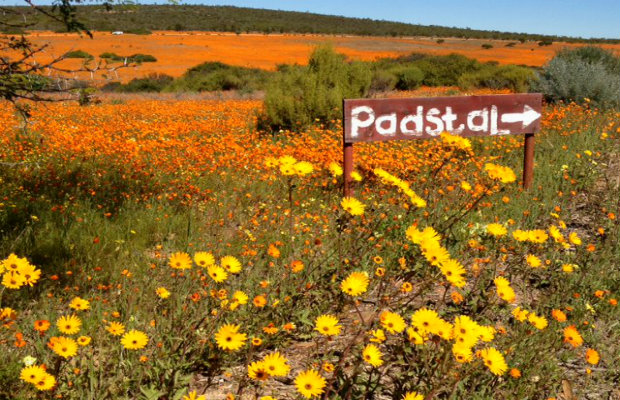 Inspired Travel: Spring Flower Routes in South Africa