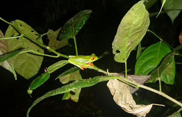 Slideshow: Waterfalls, Frog Walks & Volcanic Lakes in Costa Rica