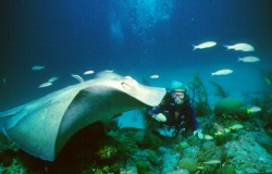 Diving Newbie? Get Your Feet Wet With Great Deals in Ft. Lauderdale, Florida