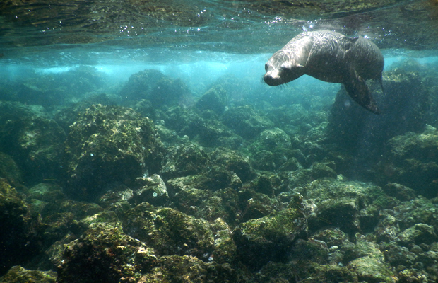 Galapagos Cruising: 5 Things to Know