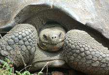 LAN's New Galapagos Route Simplifies South American Travel