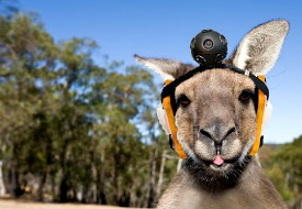 Volcanic Galactic Kargo Kangaroos: An April Fools' Day Travel News Round-up