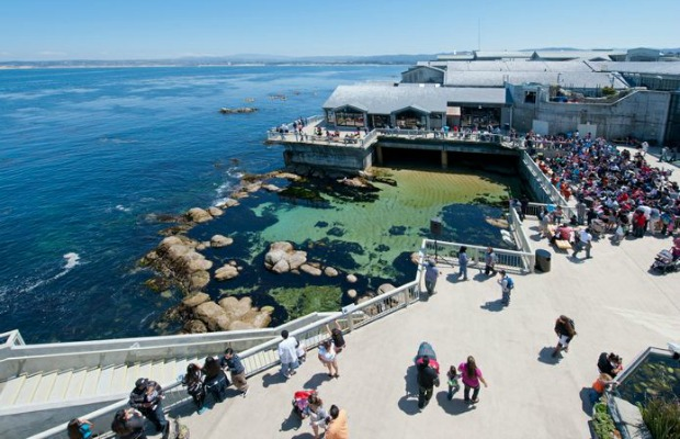 5 Things to Do in Monterey with Kids
