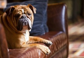 Kimpton Provides On-the-Road Pooch Pampering