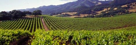 Explore Wine Country in Sonoma