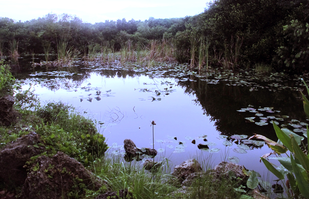 Easy Southern Escapes: Everglades City, Florida