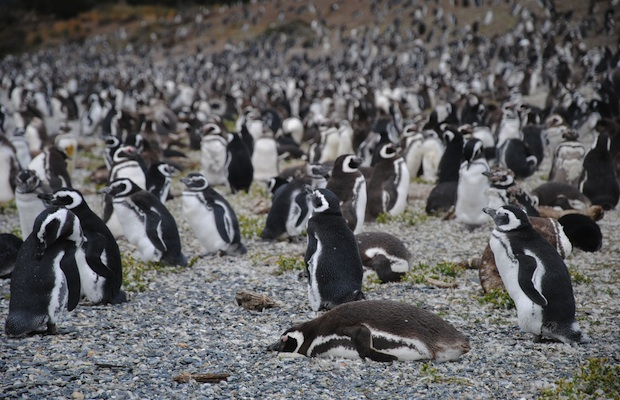 Inspired Travel: 3 Places to See Penguins Up Close