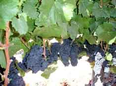 Sonoma Vineyard Stay