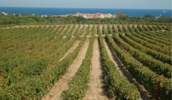 Wine Round-Up from Languedoc, France