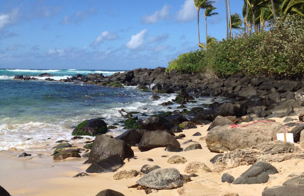 5 Places to Stop Along Oahu's Kamehameha Highway