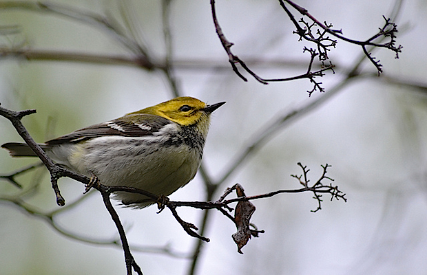 6 Great Spring Bird Migration Spots in the U.S.