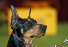 Dog Bites Two, Triggers Emergency Landing