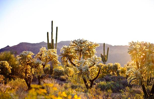Mesa: The Affordable Side of Arizona